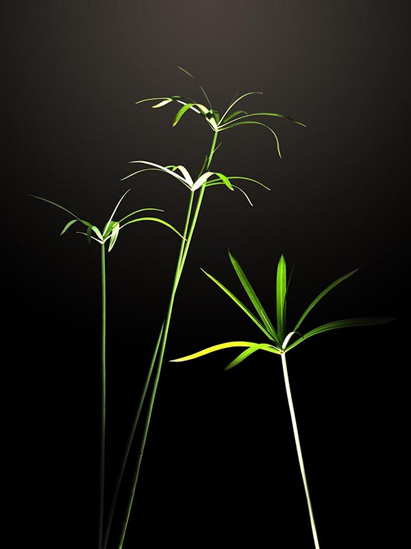 Green On Black photograph by Tim Stringer